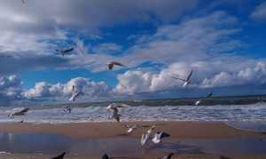Baltic Sea with seagulls